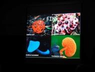 Lun. 26 marzo 2018 - Biologia dei funghi di Ermes Balmelli