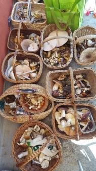 Sab. 8 settembre 2018 - Corso ricerca e riconoscimento funghi - Dalpe, alcuni dei cestini di raccolta